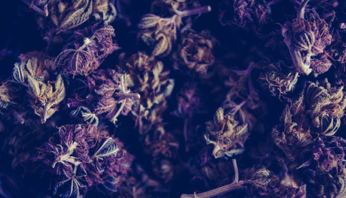 Understanding The Functions Of Cannabis